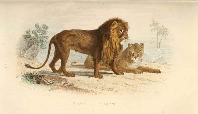 audeguy lion personne