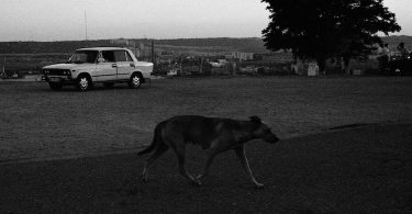 Lucie Baratte, Le chien noir