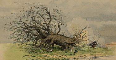 Mathieu Lindon, Rages de chêne, rages de roseau