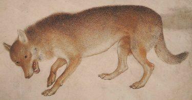 Michel Pastoureau, Le loup. Une histoire culturelle