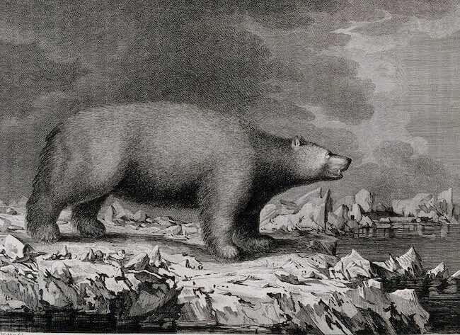 Heinrich Zimmermann, Le dernier voyage du capitaine Cook