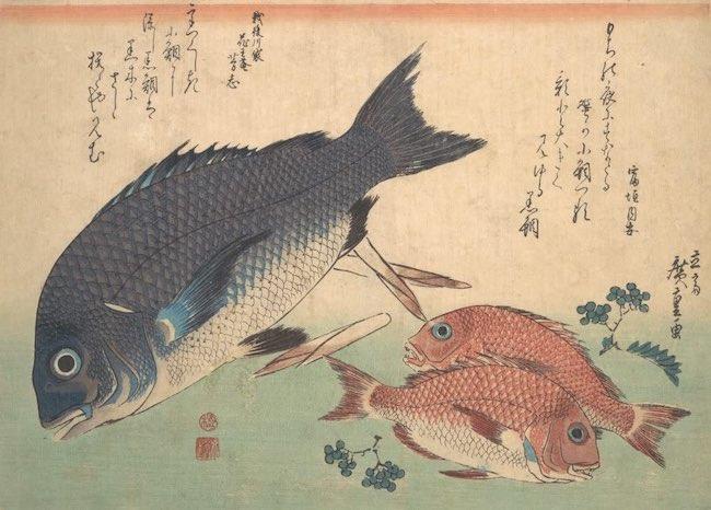Décamérez ! Les reines pêcheuses — sushis d'avril (j16)