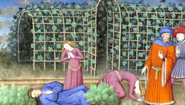 Décamérez ! La feuille de sauge, ou danger des jardins, encore (j25)