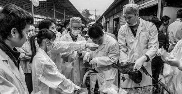 Frédéric Keck, Les sentinelles des pandémies. Chasseurs de virus et observateurs d'oiseaux aux frontières de la Chine