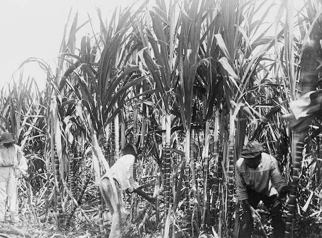 James Walvin, Histoire du sucre, histoire du monde
