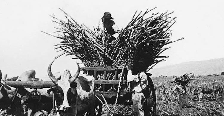 Histoire du sucre, histoire du monde, de James Walvin