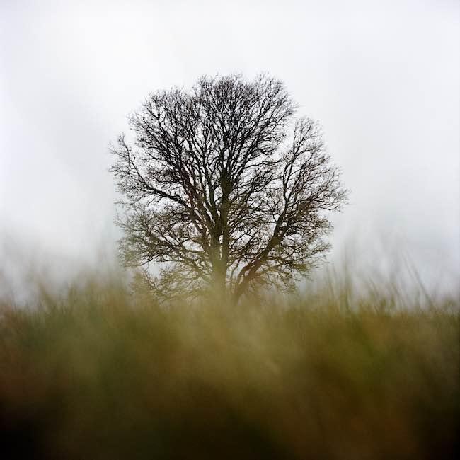 La vie, malgré, de Jacques Ancet : le sensible et le métaphysique