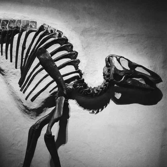 Ballades dinosauriennes de Jean-Michel Mazin : dinosaure en vadrouille