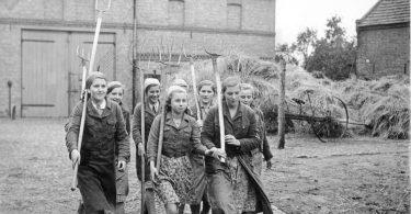 Hervé Bel, Oscar Lalo, Jérôme Prieur : regards sur la guerre allemande