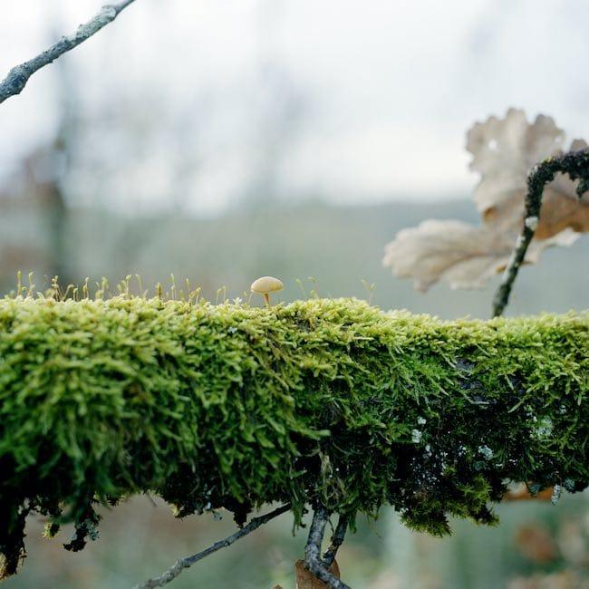 Lichens, pour une résistance minimale de Vincent Zonca : liens du lichen