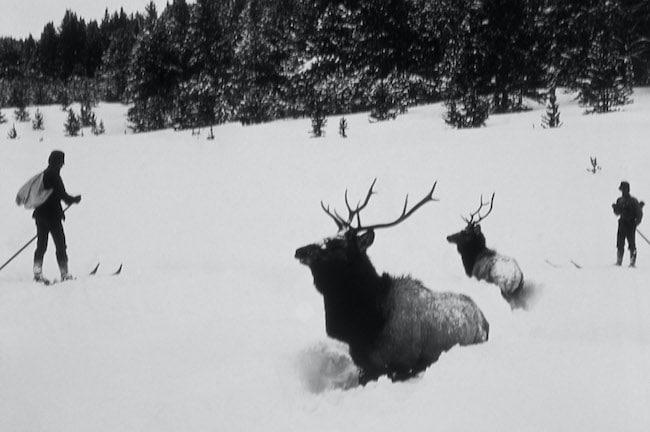 Crimes contre la nature, de Karl Jacoby : une histoire violente de la nature
