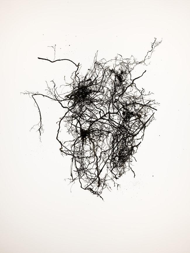 Photographier le blanc : l'objet selon Stéphane Spach